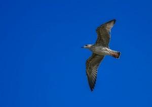 bird solo